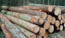 lemn de vanzare